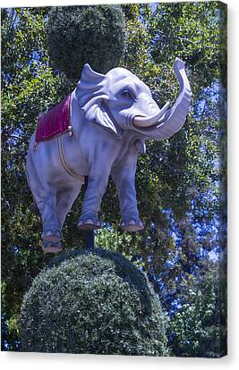 Elephant Topiary Canvas Print by Garry Gay