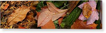 Elevated View Of Raindrops On Leaves Canvas Print by Panoramic Images
