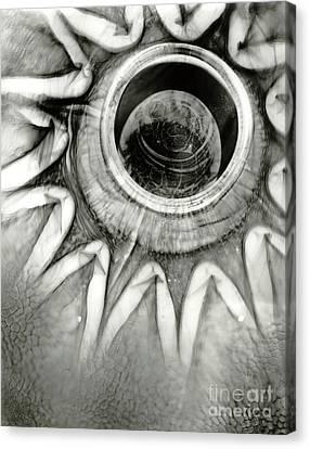 Em15 Canvas Print by Mark Stankiewicz