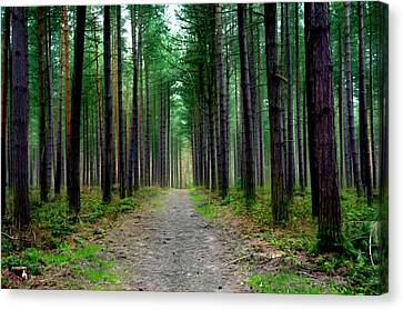 Emerald Forest Canvas Print by Svetlana Sewell