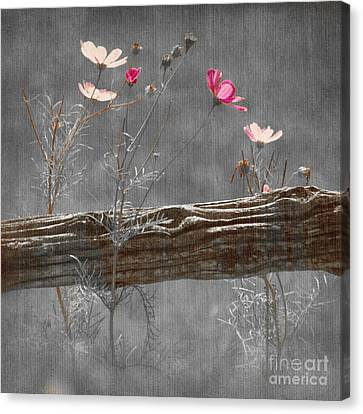 Emerging Beauties - V38at1 Canvas Print by Variance Collections
