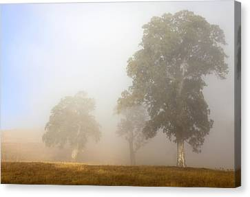 Emerging From The Fog Canvas Print by Mike  Dawson