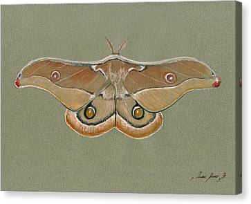 Emperor Gum Moth Canvas Print by Juan Bosco