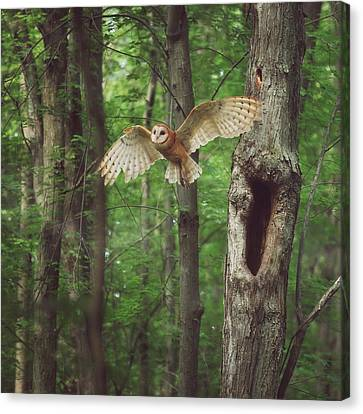 Enchanted Forest Canvas Print by Carrie Ann Grippo-Pike