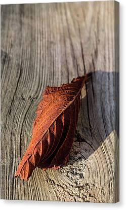 End Of Autumn Canvas Print by Edgar Laureano