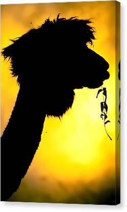 Endless Alpaca Canvas Print by TC Morgan