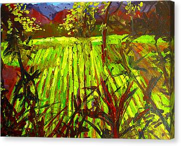 Endless Vineyards Canvas Print by Patricia Awapara