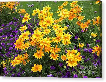 Energizing Yellow Orange And Purple Flowers Canvas Print by Carol Groenen