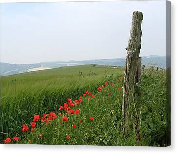 England Sussex Poppy Field Canvas Print by Yvonne Ayoub