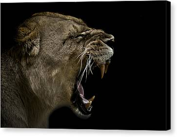 Enraged Canvas Print by Paul Neville