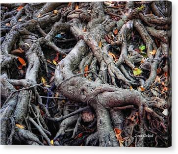 Entanglement Canvas Print by Donna Blackhall