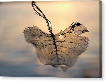 Ethereal Leaf Canvas Print by Katharine Brockway