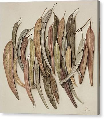 Eucalyptus Leaves Canvas Print by Jenny Barron