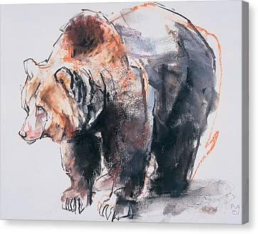 European Brown Bear Canvas Print by Mark Adlington
