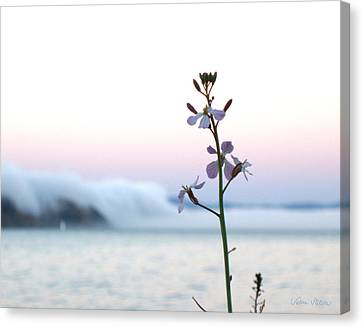 Evening Fog Rolling In Canvas Print by Sabine Stetson