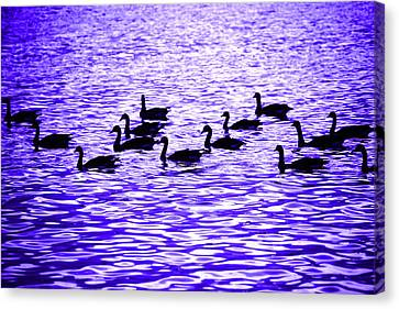 Evening Geese Canvas Print by Marilyn Hunt
