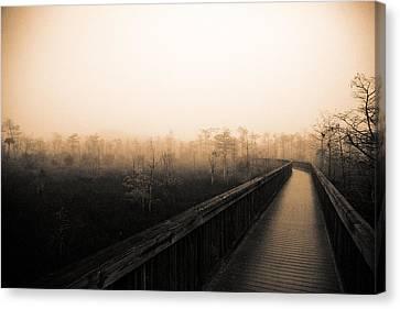 Everglades Boardwalk Canvas Print by Gary Dean Mercer Clark