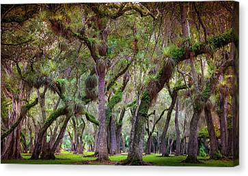 Evergreen Canvas Print by Karen Wiles