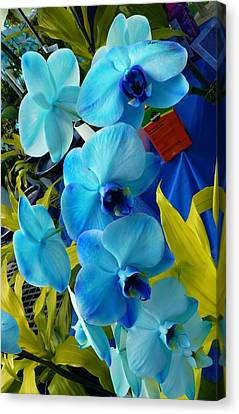 Exotic Blue Orchids Canvas Print by Jeanette Oberholtzer