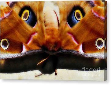 Eye On You Canvas Print by Anita Faye