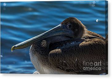Eye To Eye Canvas Print by Marvin Spates