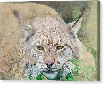 Eye To Eye With A Lynx In The Grass Canvas Print by Elaine Plesser