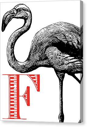 F Flamingo Print Canvas Print by Thomas Paul