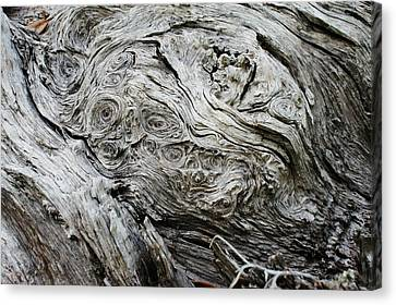 Facing Whorlywood Canvas Print by Lynda Dawson-Youngclaus