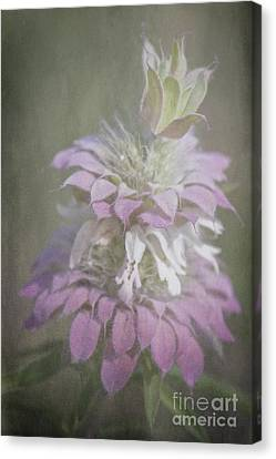 Faded Purple Canvas Print by Lisa Holmgreen