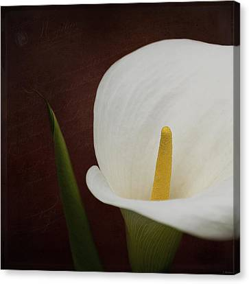 Faith - Flower Art Canvas Print by Jordan Blackstone