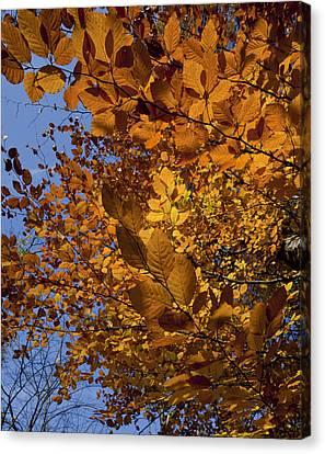 Fall 2010 51 Canvas Print by Robert Ullmann
