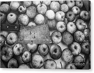 Fall Apple Picking Canvas Print by Glenn Gordon