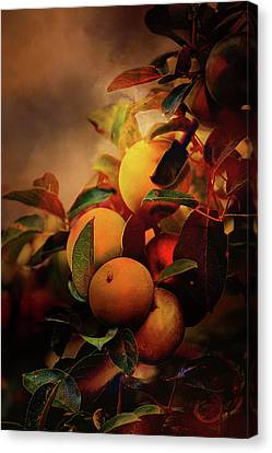 Fall Apples A Living Still Life Canvas Print by Theresa Campbell