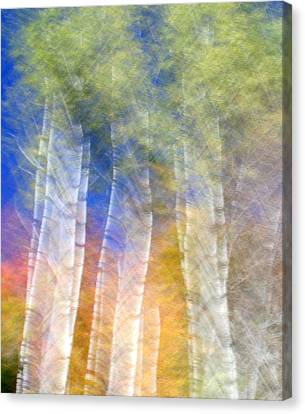 Fall Birches Canvas Print by Doug Hockman Photography