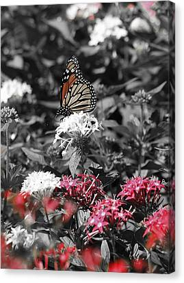 Fall Butterfly 02 Canvas Print by Pamela Critchlow