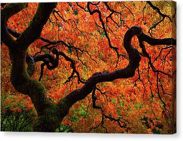 Fall Chaos Canvas Print by Darren White