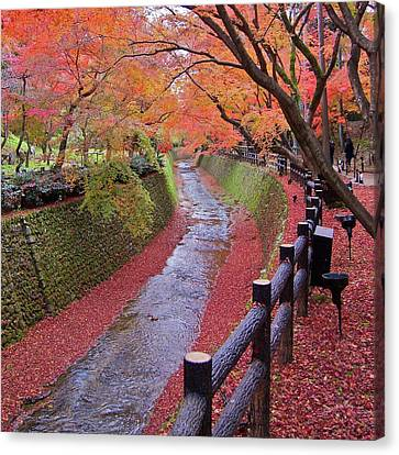 Fall Colors Along Bending River In Kyoto Canvas Print by Jake Jung