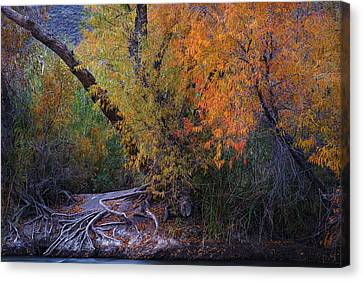 Fall Colors At The Salt River Canvas Print by Dave Dilli