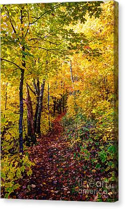 Fall Colors Oberg Mountain North Shore Minnesota Canvas Print by Wayne Moran