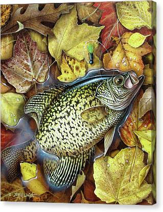 Fall Crappie Canvas Print by JQ Licensing