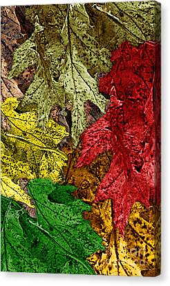 Fall Down Canvas Print by Tom Romeo