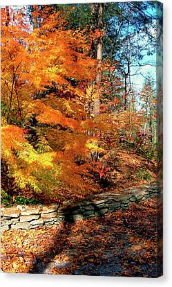Fall Feathers Canvas Print by Larry Bishop