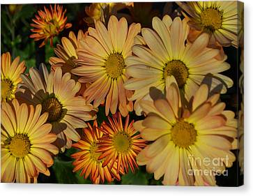 Fall Flowers In Madison  Canvas Print by Amy Lucid