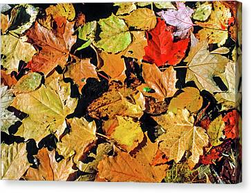 Fall Foliage On Water Canvas Print by Morris Finkelstein