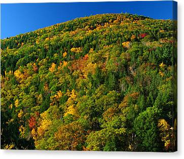 Fall Foliage Photography Canvas Print by Juergen Roth