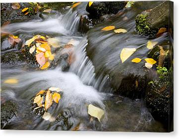 Fall Leaves In Rushing Water Canvas Print by Craig Tuttle