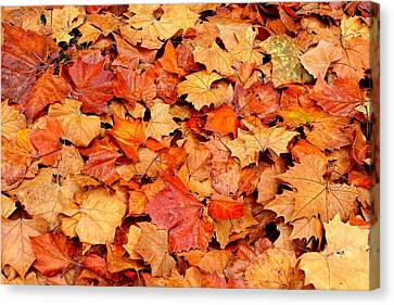Fall Leaves Canvas Print by Kimberly Oegerle