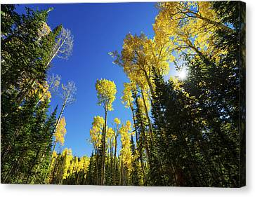 Fall Light Canvas Print by Chad Dutson