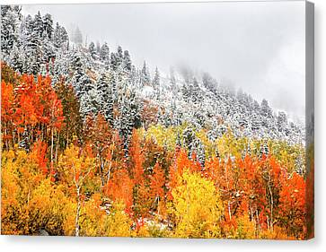 Fall To Winter Canvas Print by David Millenheft