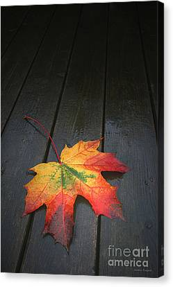 Fall Canvas Print by Winston Rockwell